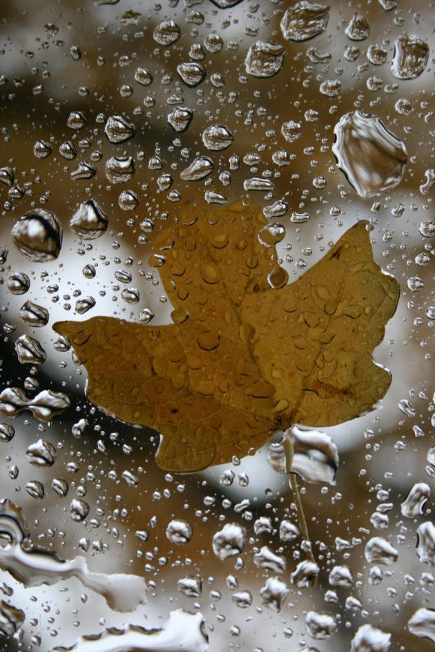 wet-leaf-2
